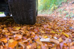 Image of tires on leaves